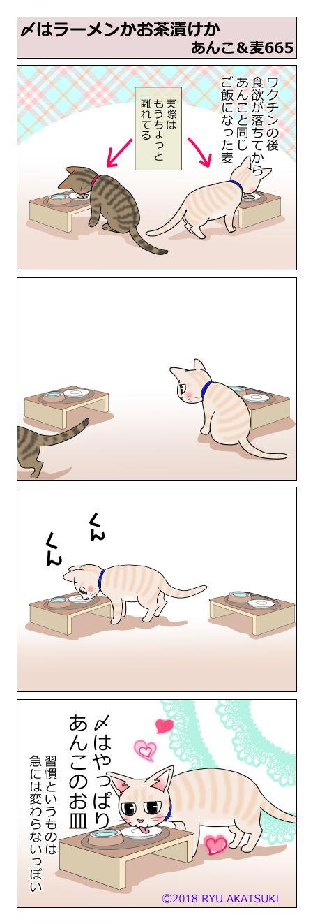 あんこ&麦STORY665