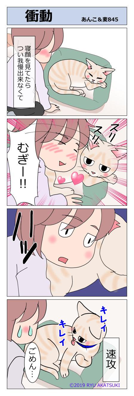 あんこ&麦STORY845