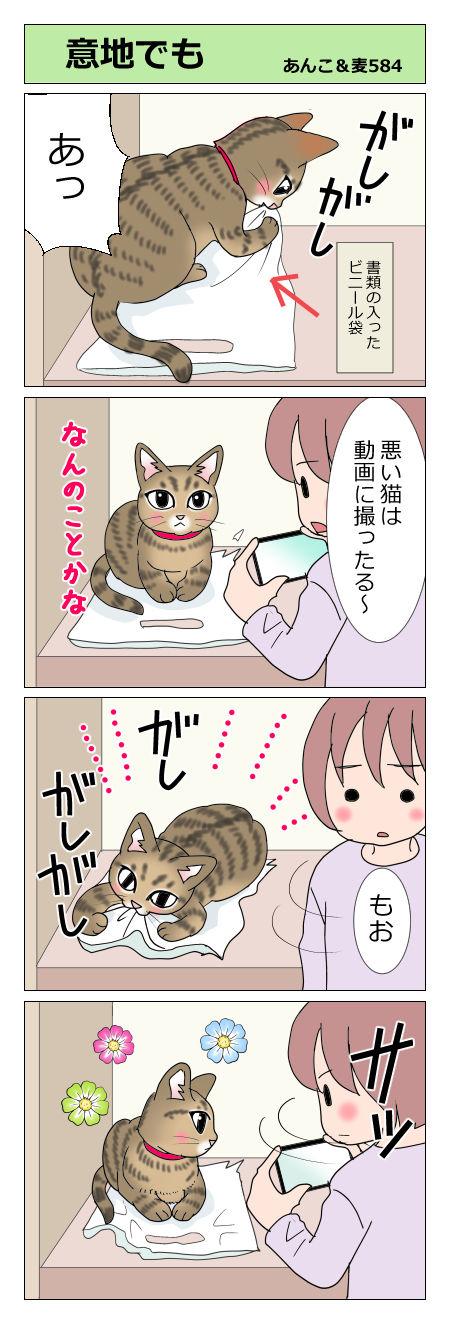 あんこ&麦STORY584