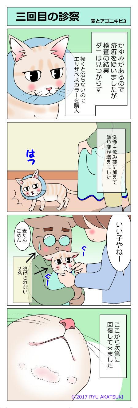 あんこ&麦kenko11