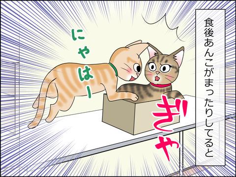 あんこ&麦STORY1438a
