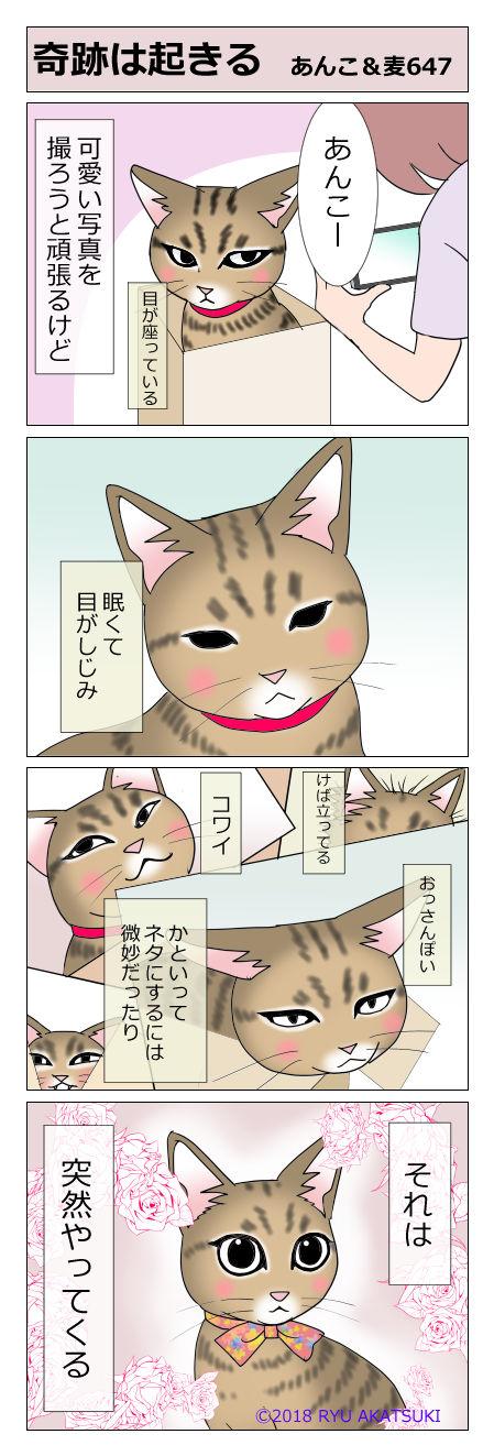 あんこ&麦STORY647