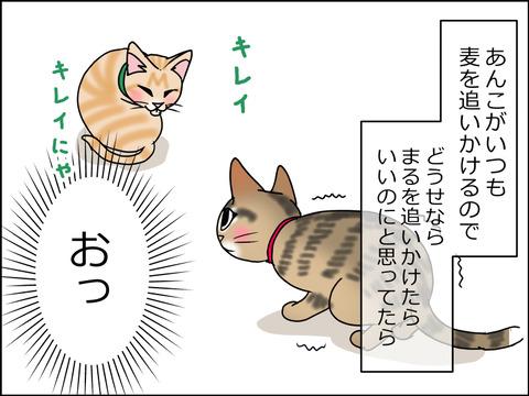 あんこ&麦STORY1464a