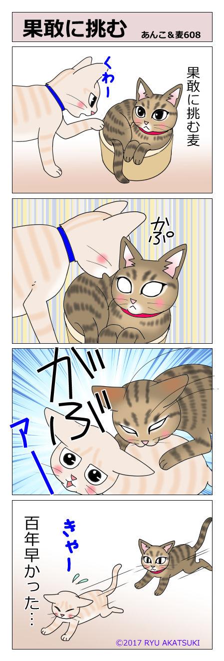 あんこ&麦STORY608