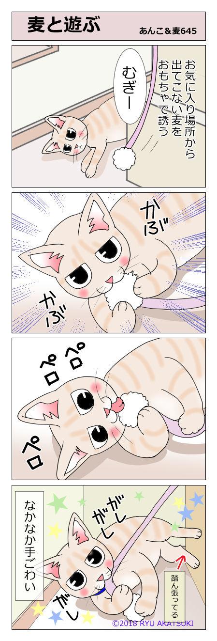あんこ&麦STORY645