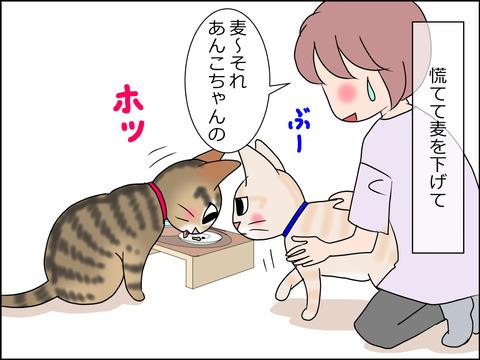 あんこ&麦STORY1447b
