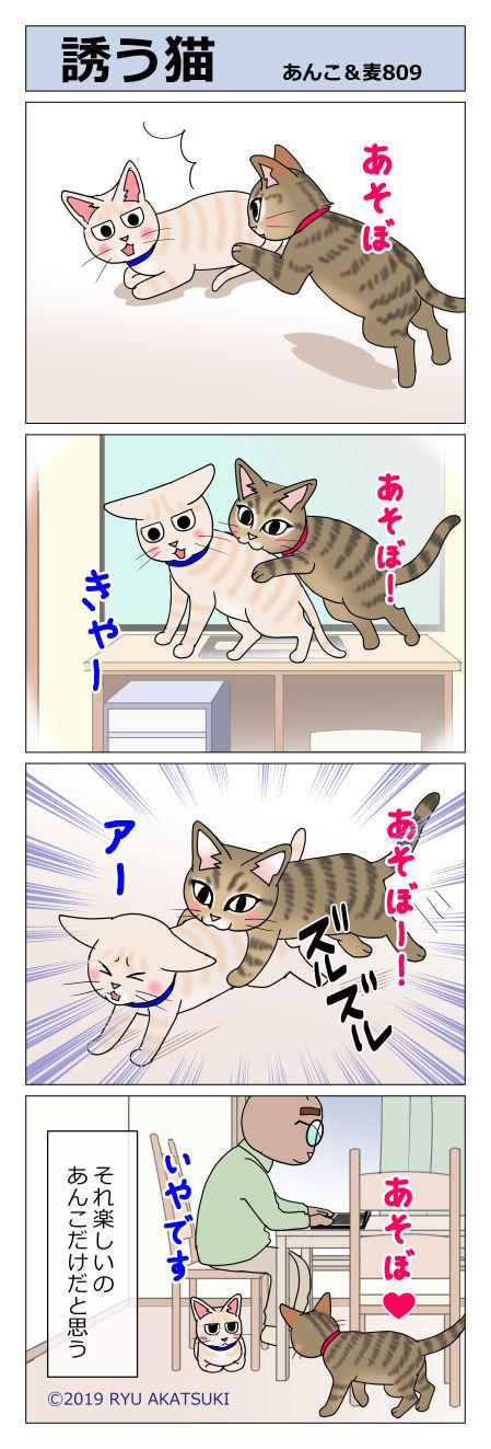 あんこ&麦STORY809