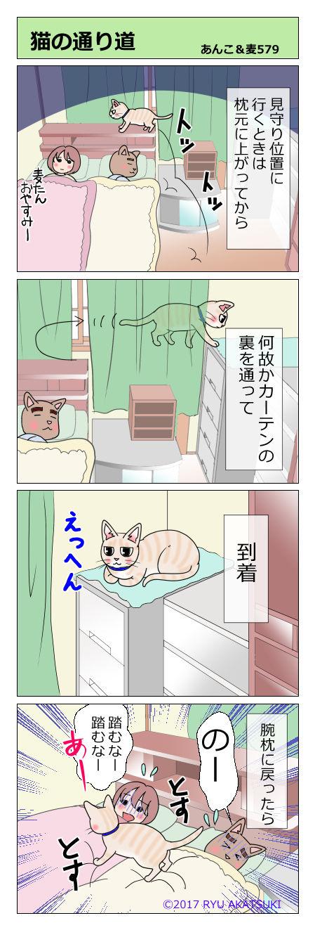 あんこ&麦STORY579