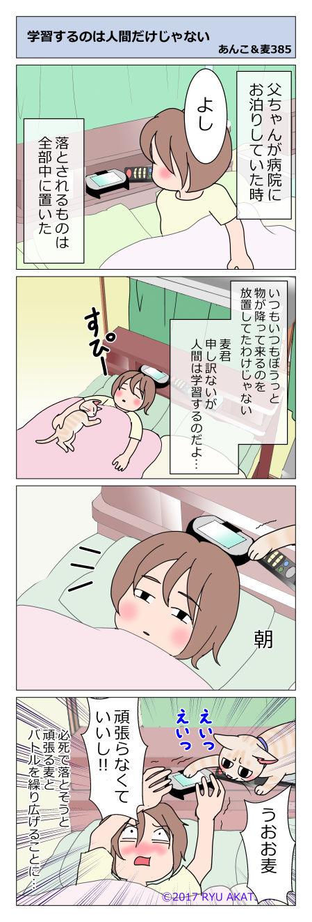 あんこ&麦STORY385