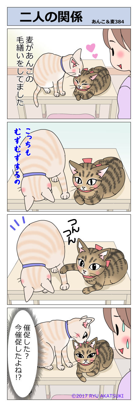 あんこ&麦STORY384