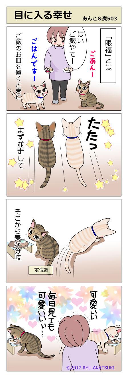 あんこ&麦STORY503