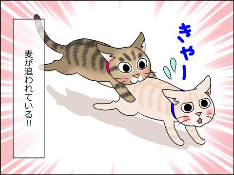 あんこ&麦STORY1458a