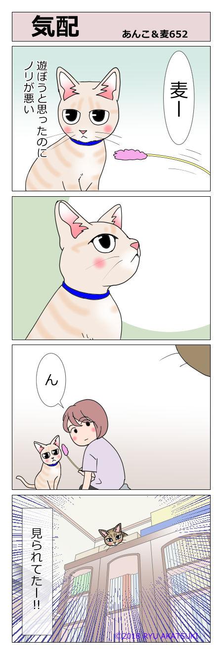 あんこ&麦STORY652