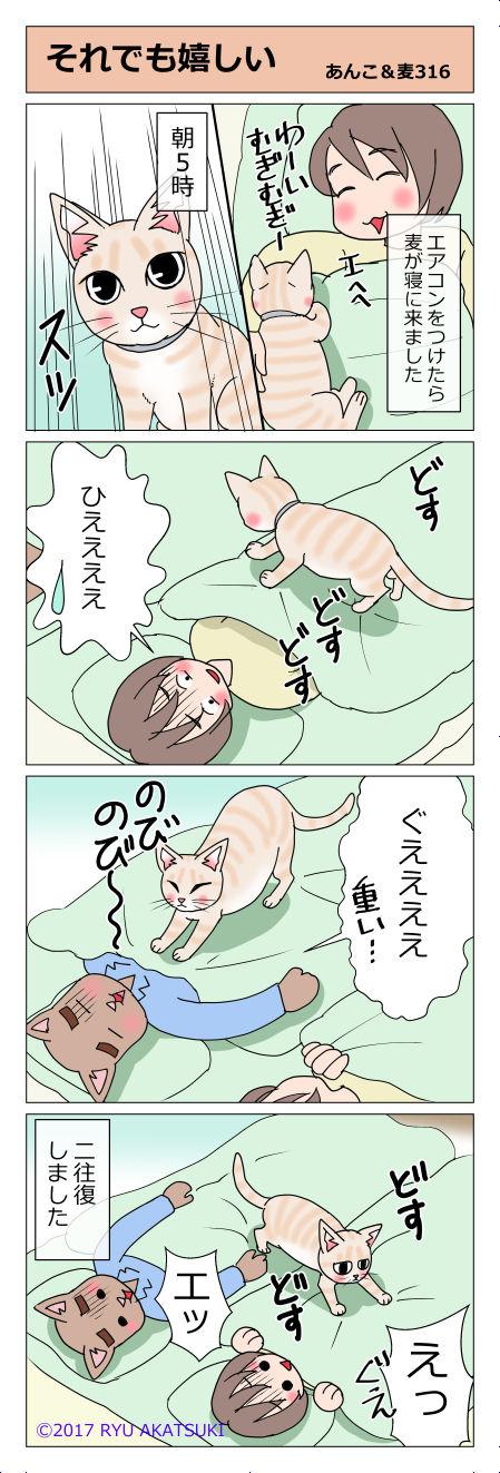 あんこ&麦STORY316