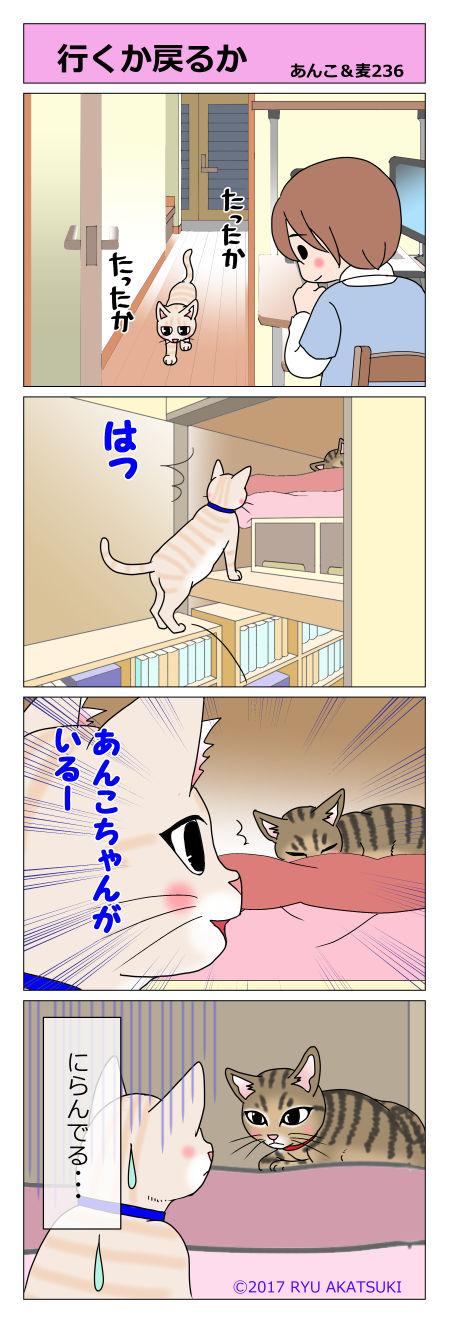 あんこ&麦STORY236