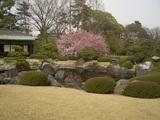 庭園での桜