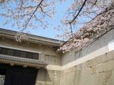 大手門と桜