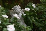 天使と日々草1