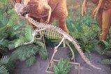 A恐竜&化石02_鸚鵡嘴龍