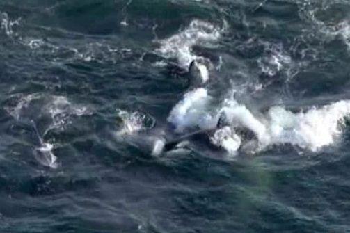 クジラの画像 p1_29