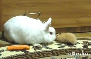 ウサギ。ハムスター