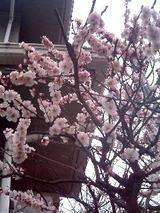 小さな春、み〜つけた。