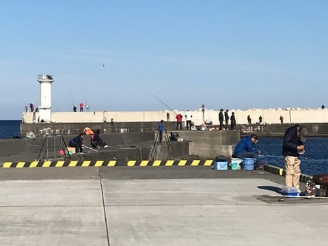 伊豆伊東港で釣りは大ぶりなキス...