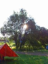 スウェーデンの木漏れ日