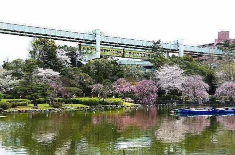 千葉公園 ガーディの巣 : ポケモ...