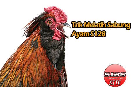 Trik Melatih Sabung Ayam S128