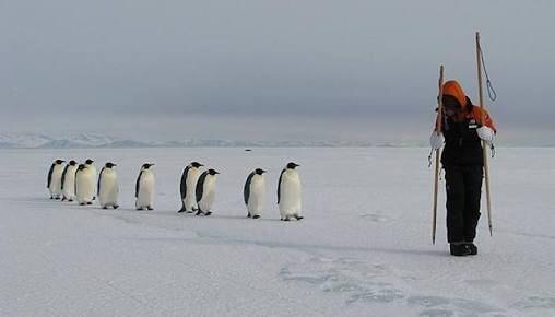 「二足歩行か…こいつもペンギンやな!」