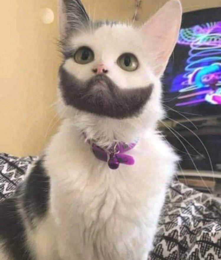 【悲報】めっちゃ山田孝之っぽい猫が発見されてしまう