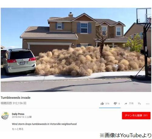 【悲報】アメリカ人、草が大量発生し家から出られないwwwwwwwwwwwwwww