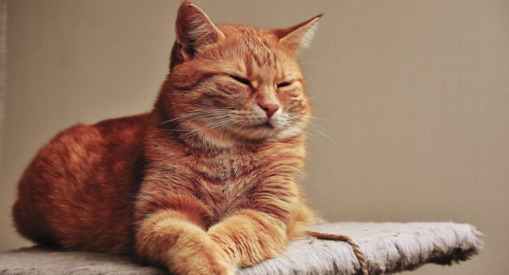 【ファッ!?】ネコが400万円を遺産相続してしまうwwwwwwwwww
