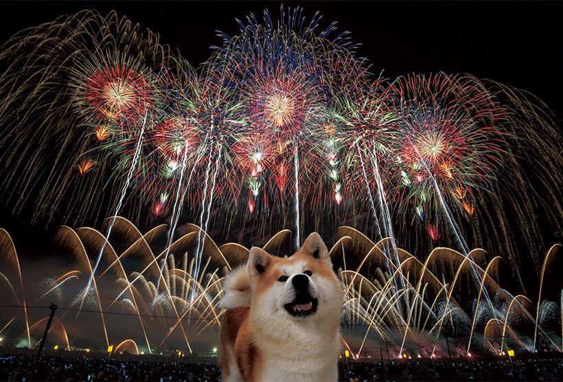 【画像あり】明らかに合成っぽい秋田犬で草