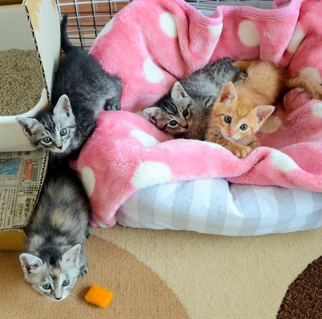 【画像】確信犯?ネコ飼う家の前に子ネコ4匹放置「ファー」と威嚇