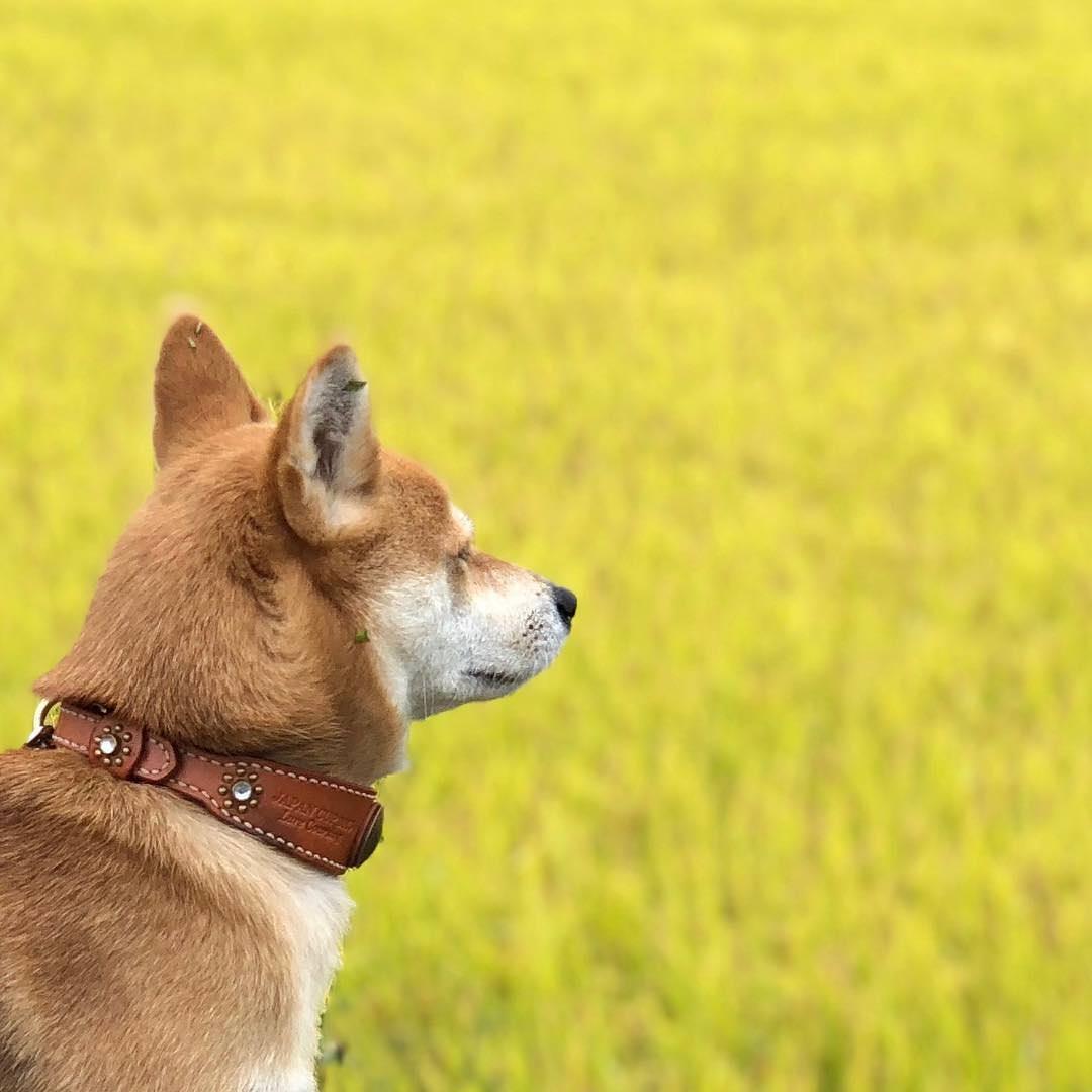 【朗報】イッヌ、実りの秋を感じる