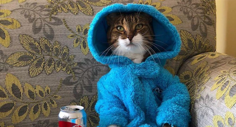 【画像】米大使館、間違って「猫のパジャマパーティー」の招待状を一斉送信してしまう