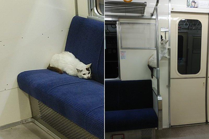 【ほっこり】電車の座席で寝転がる「かわいすぎる迷惑客」の姿がこちら…