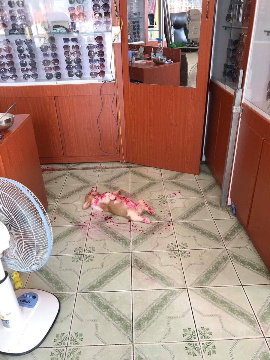 【悲報】犬さん、無惨な姿で発見される… ※画像