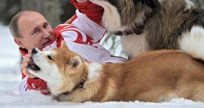 ザギトワ「秋田犬かわいい!だいすき!ほしい!」キャッキャ  プーチン大統領「はぁ…」