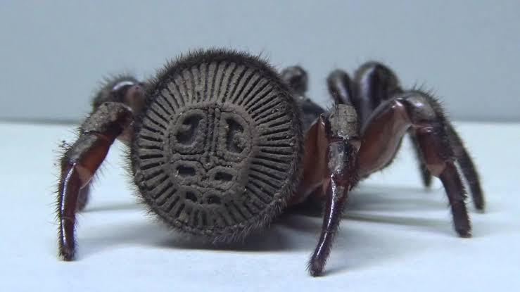 【画像】「うわっ!何か虫いる!」→「なんだクモか…」 クモの安心感は異常www