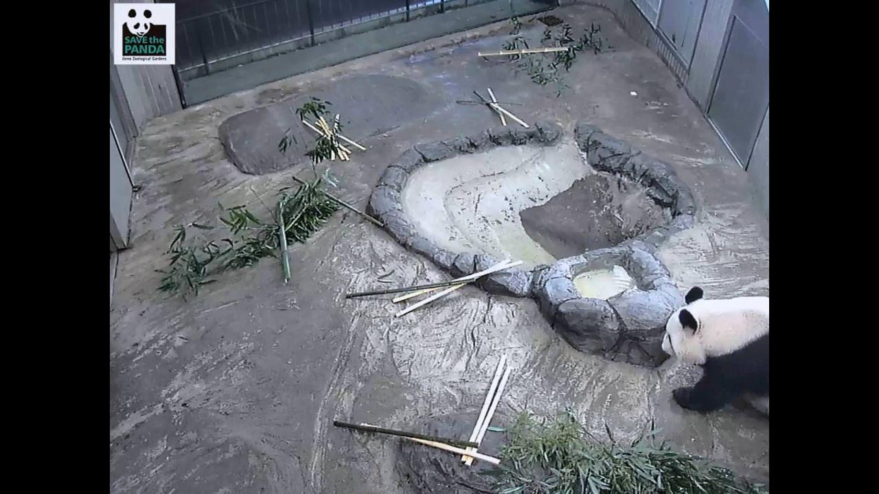 上野動物園のシャンシャン監視カメラwwwwwwww