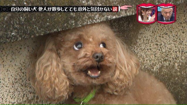 スギちゃんに愛犬虐待説wwww