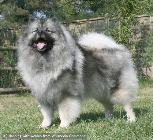 【速報】宇宙一可愛い犬、決まる