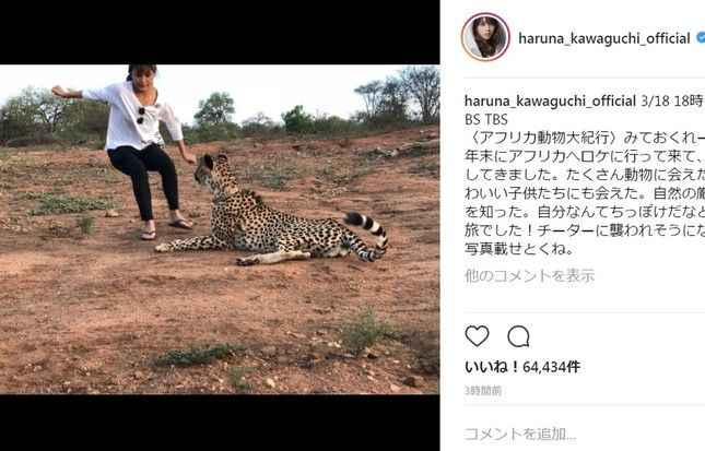 【女優】川口春奈「チーターに襲われそうになった」 衝撃写真にファンは...「危なすぎ」「顔がガチ」