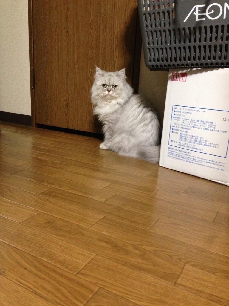 http://livedoor.blogimg.jp/s97514701/imgs/4/4/44fd1b4d.jpg