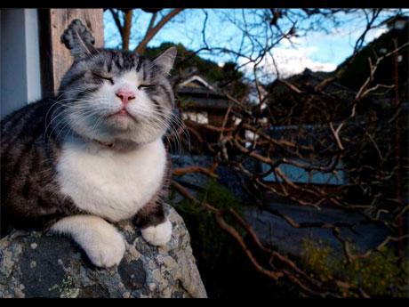 http://livedoor.blogimg.jp/s97514701/imgs/e/b/ebb84ec9.jpg