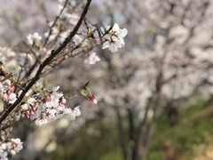 IMG_5993 (編集済み)