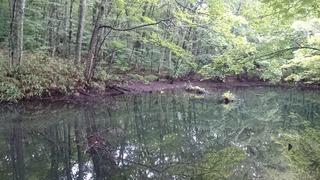 蔦の小沼3
